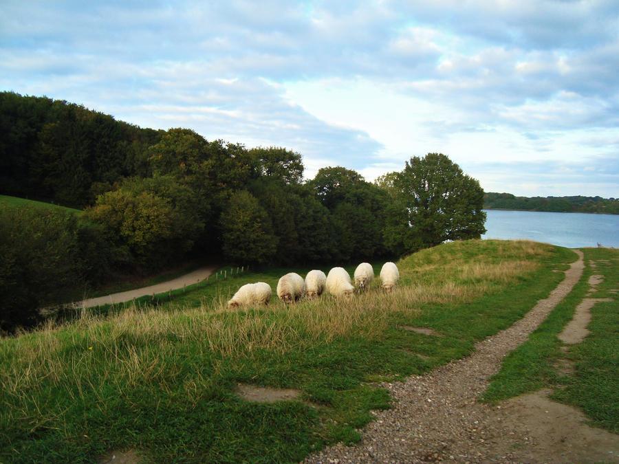 Wandering sheep by dwarfeater