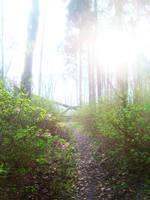 Bright Path by dwarfeater