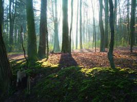 Forest by dwarfeater