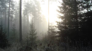 Cold Forest IV by dwarfeater