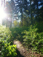 Forest Path II by dwarfeater