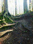Root Stairs