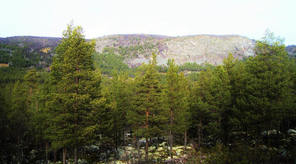 Forest XI by dwarfeater