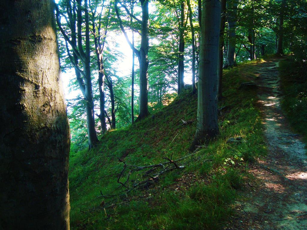 Forest Path XII by dwarfeater