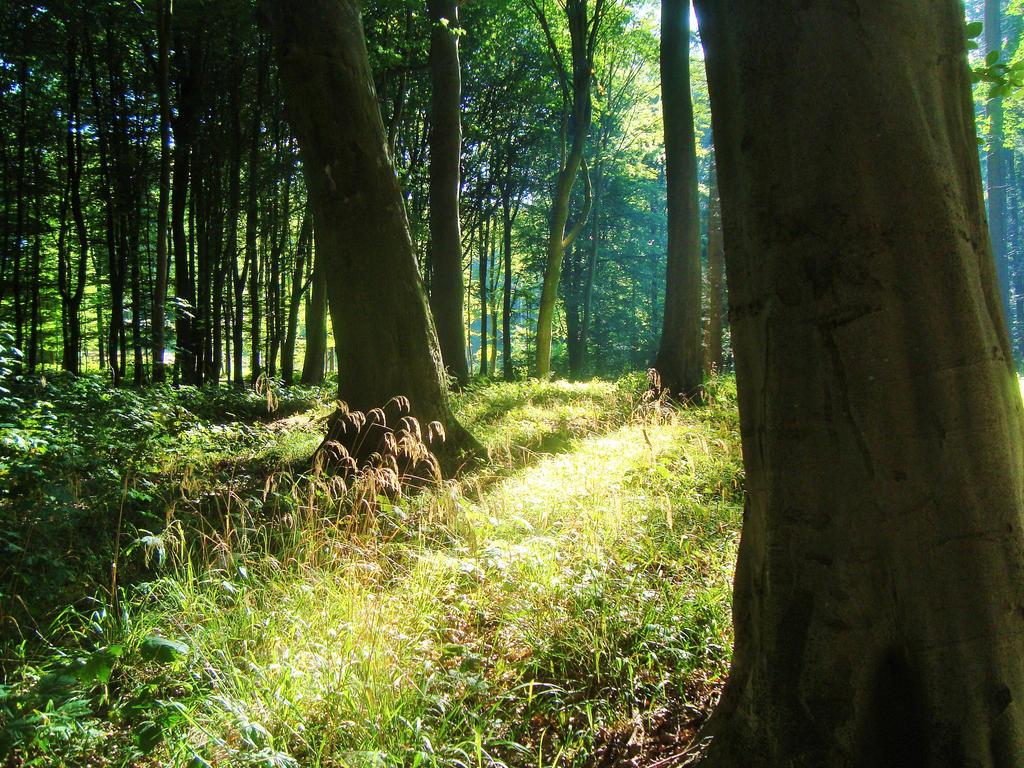 Forest XII by dwarfeater