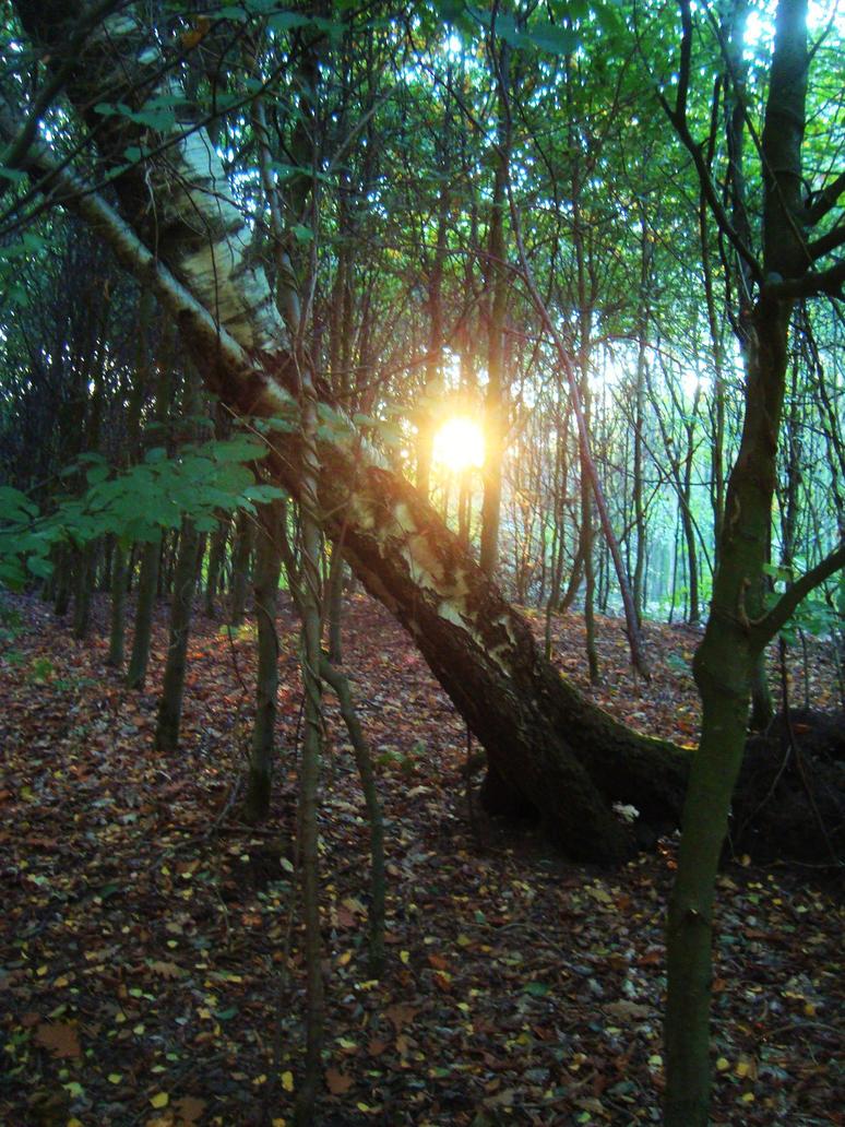 Forest Sunrise by dwarfeater