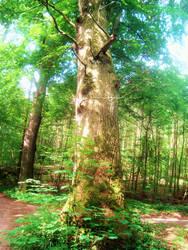 Forest XVIII