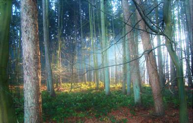 Forest XIX