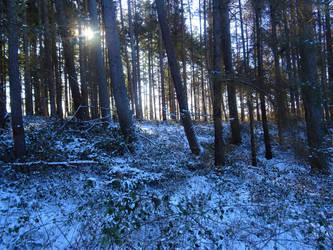 Forest XXI