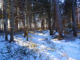 Forest XXII