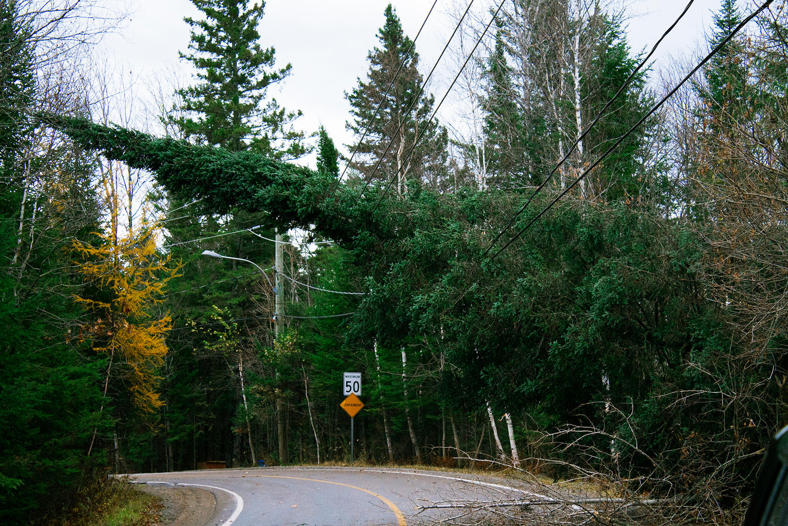 Tree fell down on power lines by jonathanfaulkner