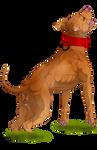 American pitbull terrier by anonymoushybridwolf