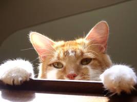 Peeking Over