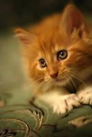 Valletta the kitty 2 by narabia
