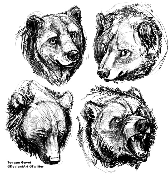 Bears-10-3 by teagangavet