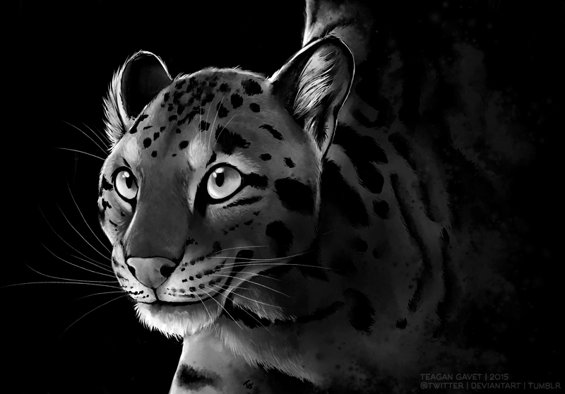 Clouded Leopard by teagangavet