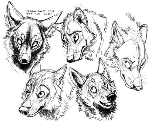 1-19-16 Dog Shapes