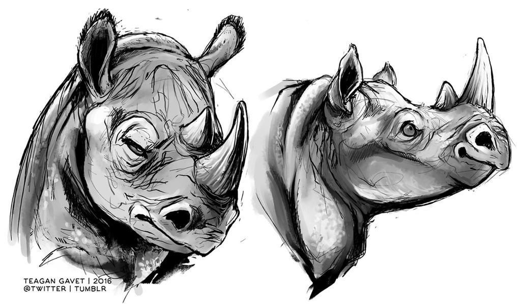 Rhinos 2-8-16 by teagangavet