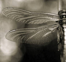 dragonfly by panpropanbutan