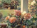 My fragrance roses