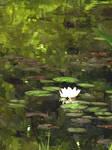 Waterlilly FS 3