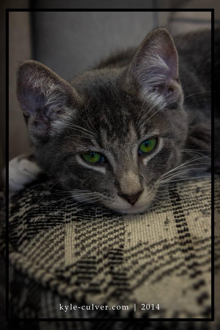 YukiNeko - The New Cat