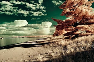 julian bay infrared