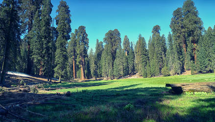 sequoia by BrianWolfe