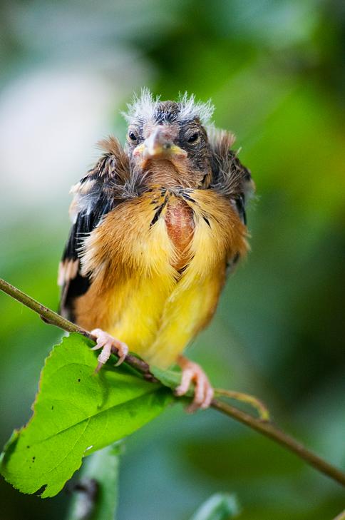 birdie by BrianWolfe