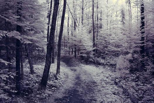 voyageurs forest