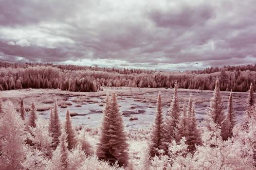 voyageurs beaver pond
