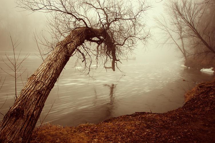 Shrouded in Fog VIII