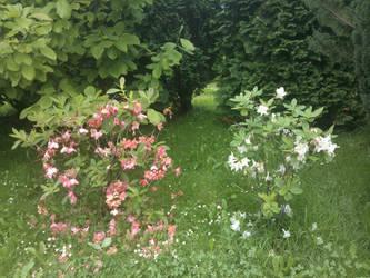 Spring Garden by Tuskaffka