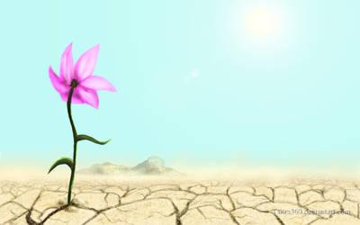 Flower in a Desert by Tsitra360
