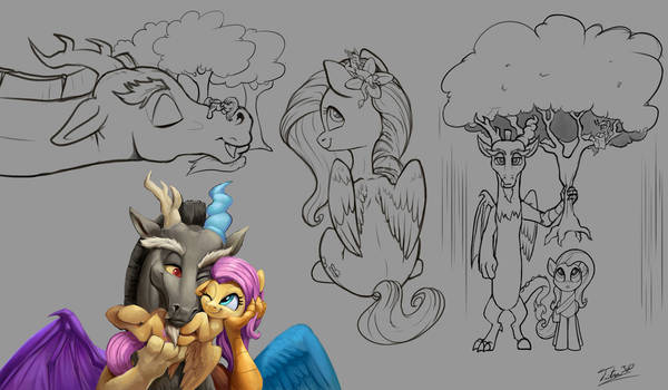 Discord and Shy