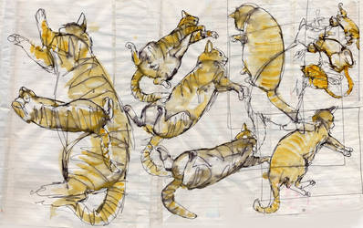Cat Sketches Montage by mikartmilo