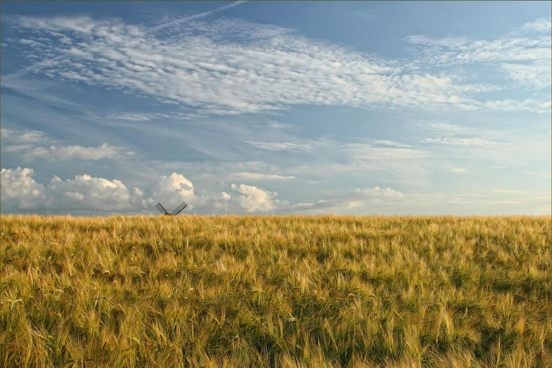 Beyond the Barley by Bogbrush