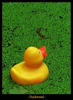 Duckweed by Bogbrush