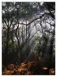 The Wildwood