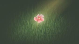 Daily Doodle #9 - Little Flower by Meg-07