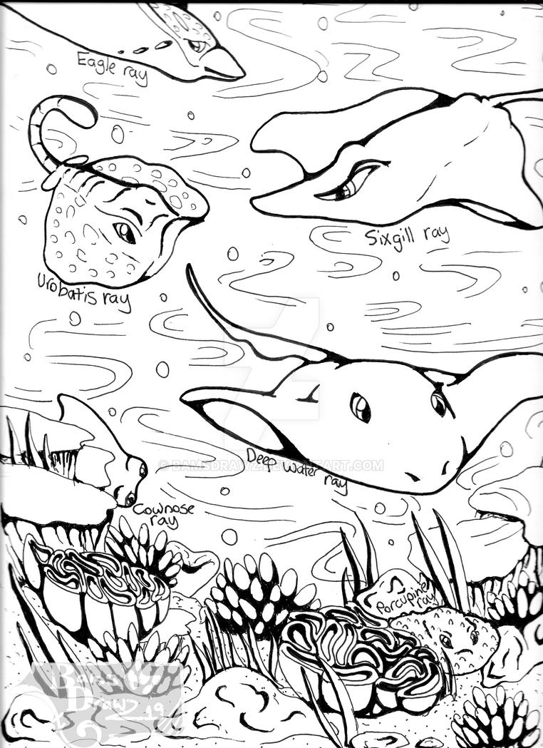 Stingray Coloring Page By Bamsdrawz On Deviantart