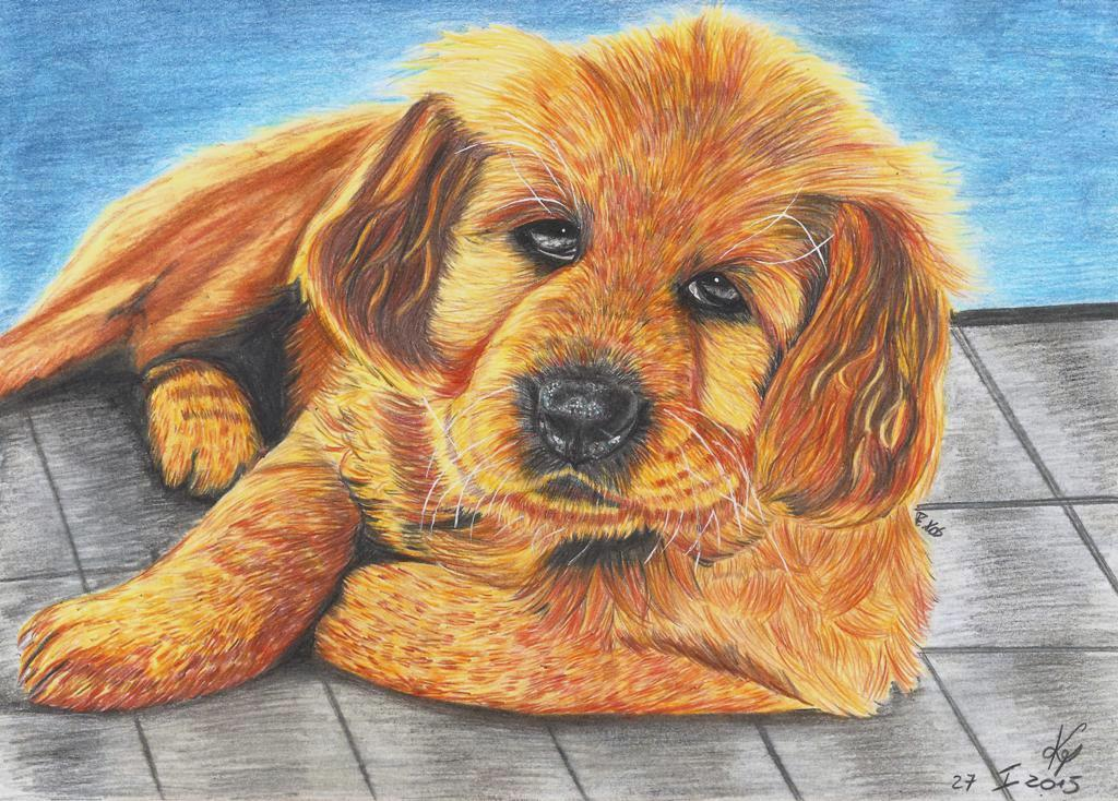 Golden Retriever by kosikkkk