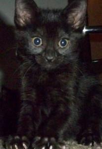 mycatsapoptart's Profile Picture