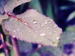 Water Drops by NastiuFa