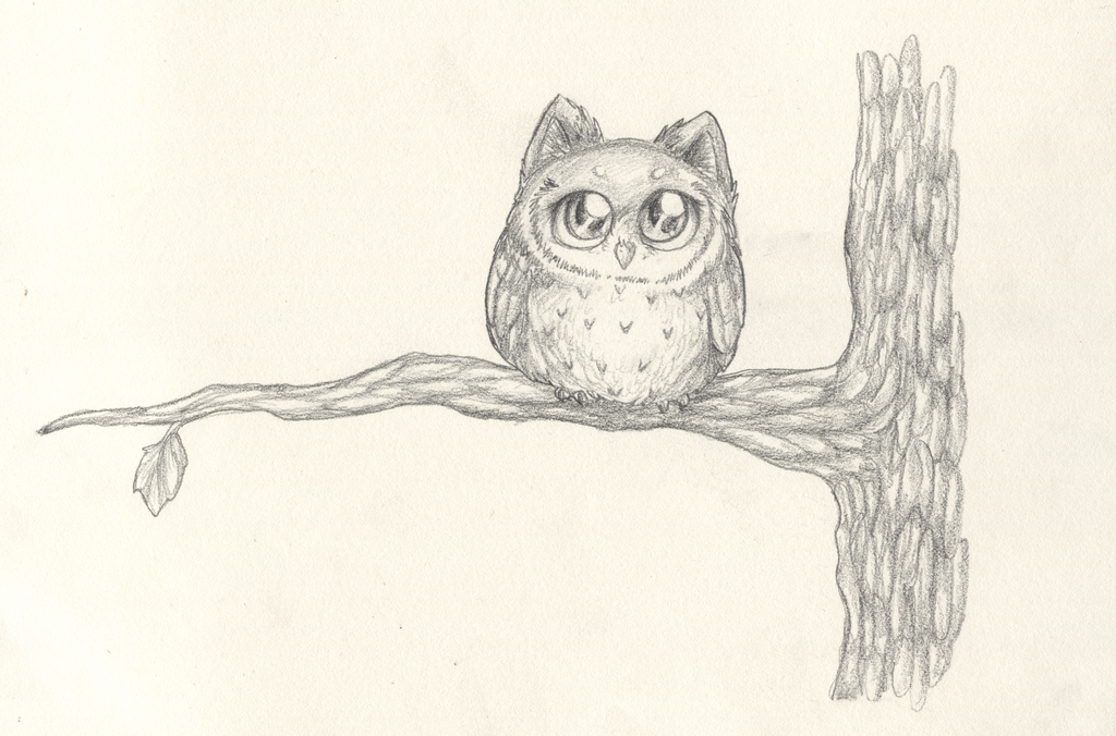 Cute owl love drawing - photo#24