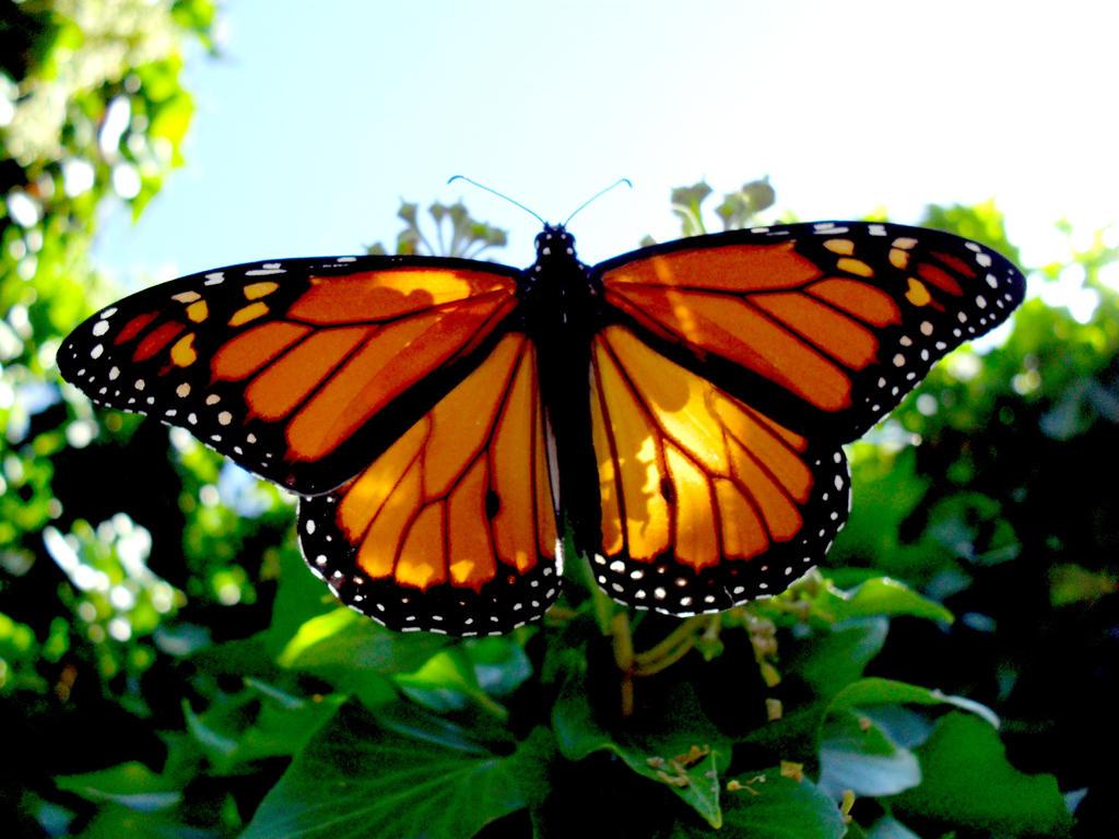 Z Gallerie Butterfly Butterfly-z by OPTILUX...