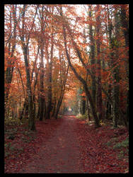 Woodland Warmth by Diapason