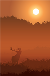 Silhouette of red deer in mist at sunrise