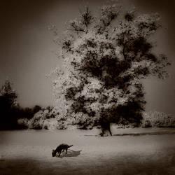 bliss by DogAngel