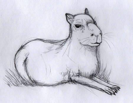 Capybara sketch